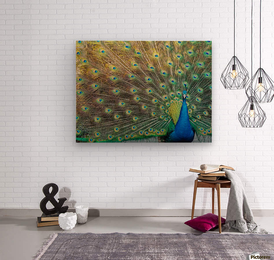 Peacock Feathers Full Frame  Wood print