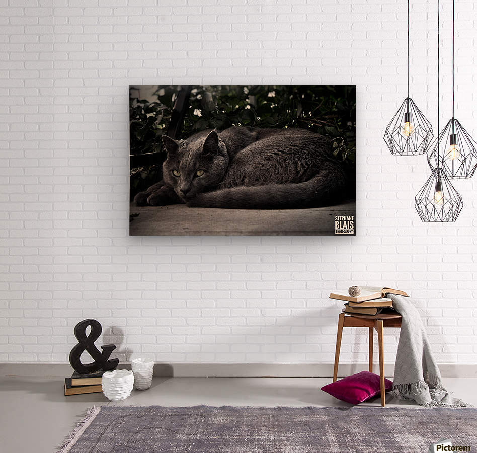Charlie the Cat  Wood print