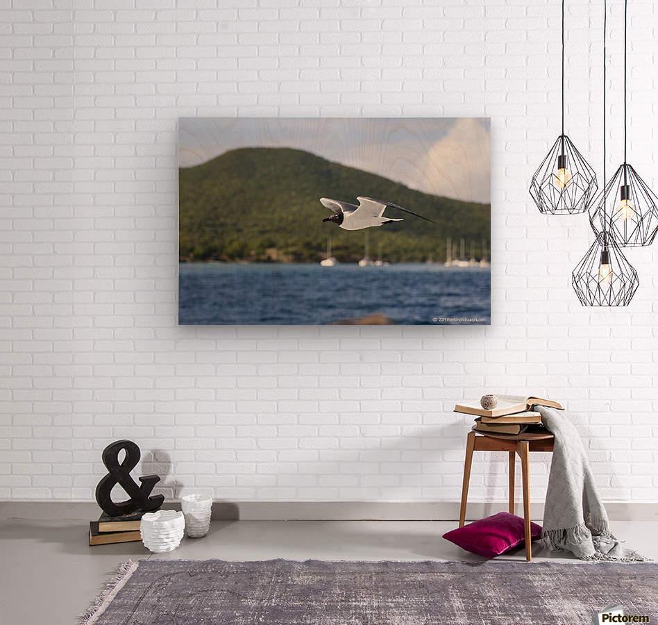 Laughing Tern in Flight  Wood print