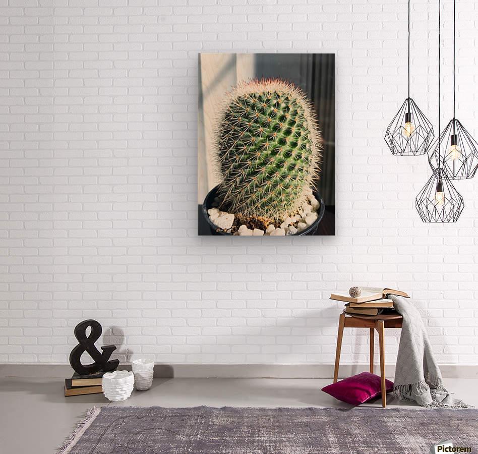 closeup green cactus texture with morning sunlight  Wood print