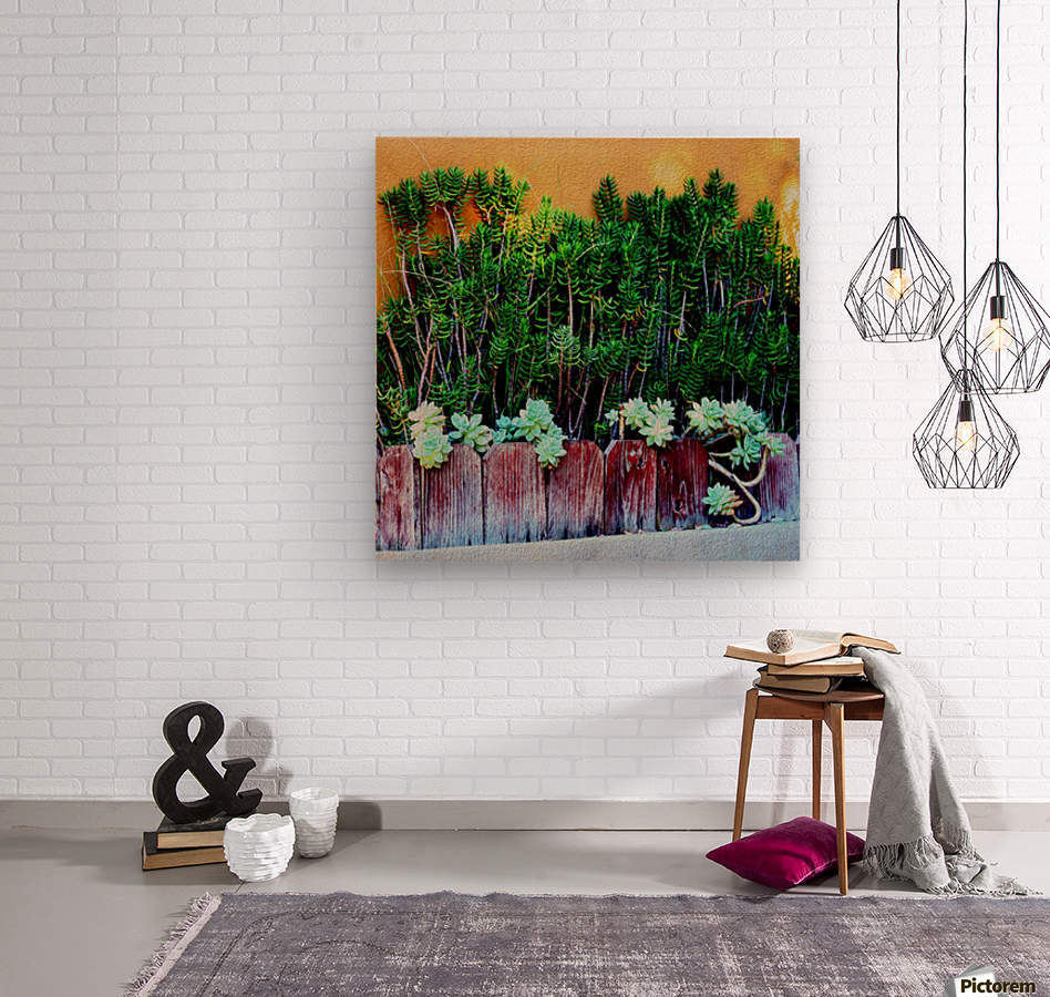 Wall of Succulents  Wood print