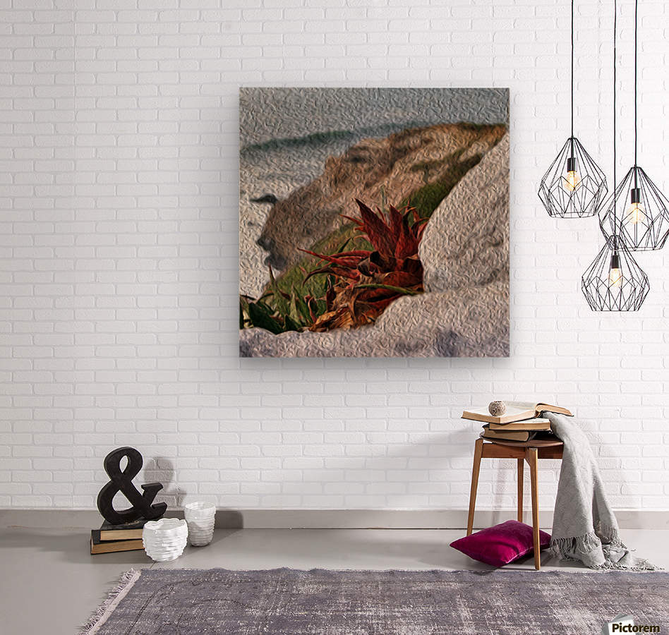 Coastal Red Aloe Vera   Wood print