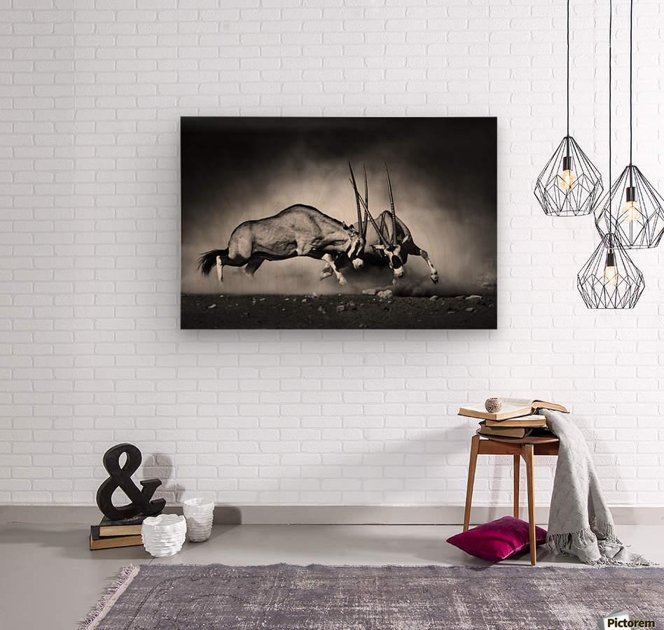 Gemsbok fight  Wood print