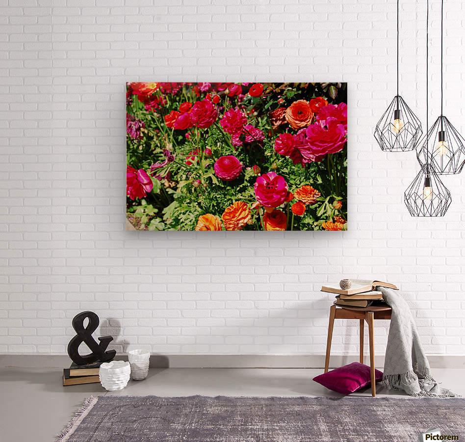 Flowers Growing in a garden  Wood print
