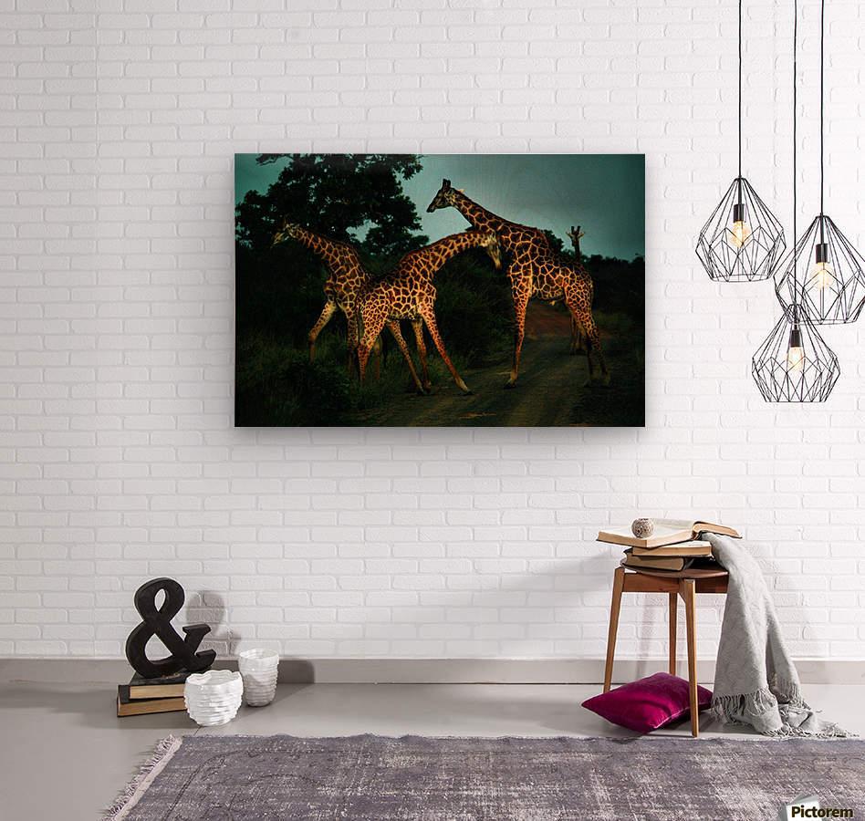 Giraffes South Africa  Wood print