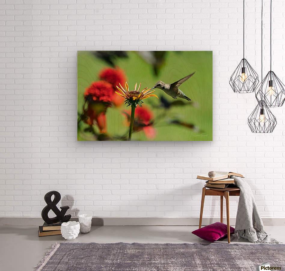 Colibri butinant  Wood print