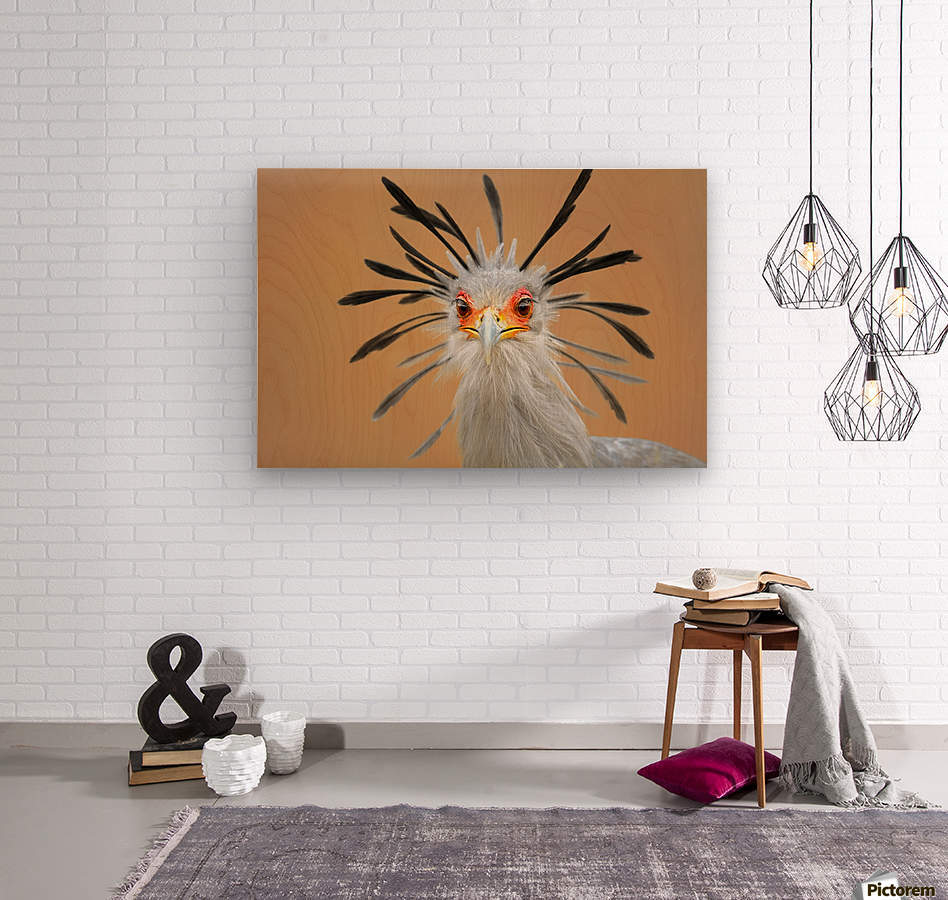 Secretary bird portrait close-up head shot  Wood print