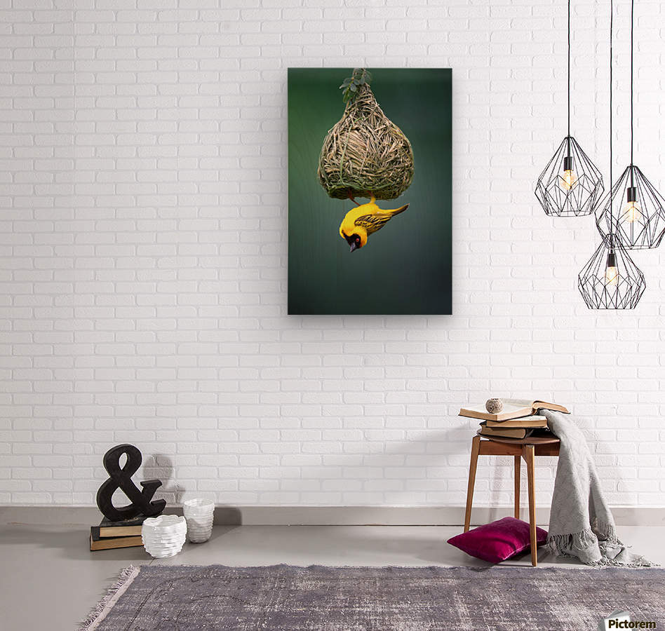 Masked weaver at nest  Wood print