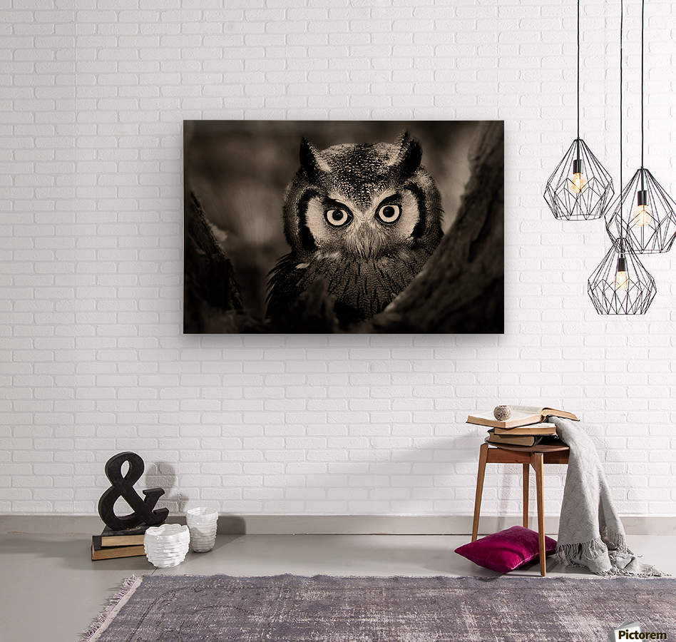 Whitefaced Owl close-up  Wood print