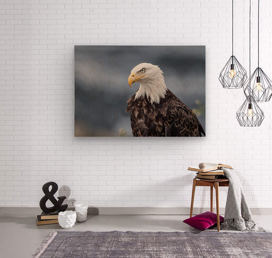 Portrait of an Eagle  Wood print