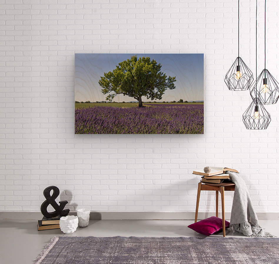 Tree in a lavender field  Wood print