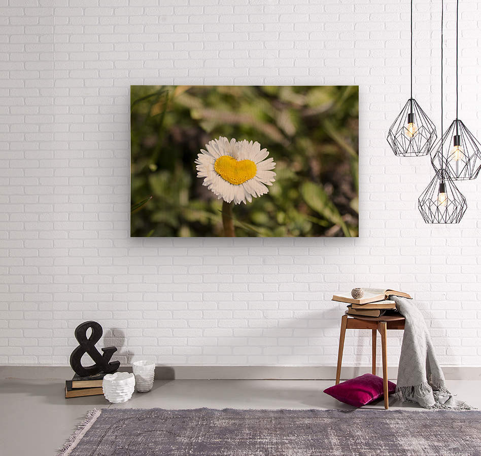 Heart shaped daisy  Wood print