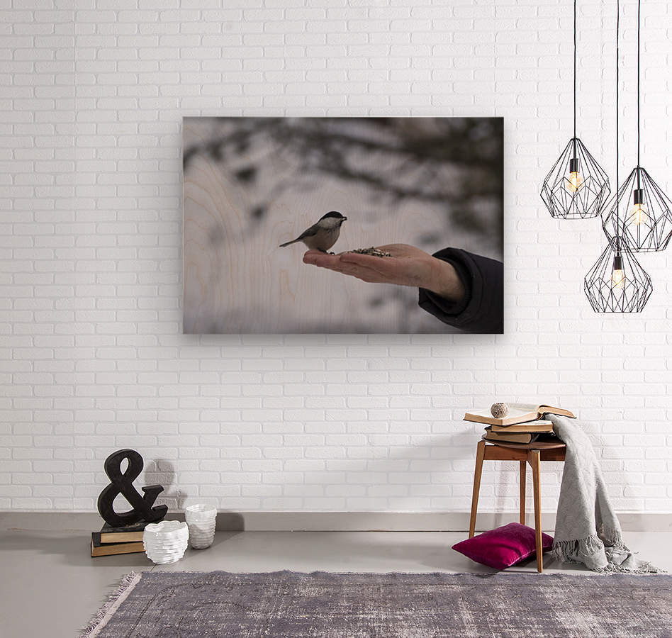 A bird on the hand  Wood print
