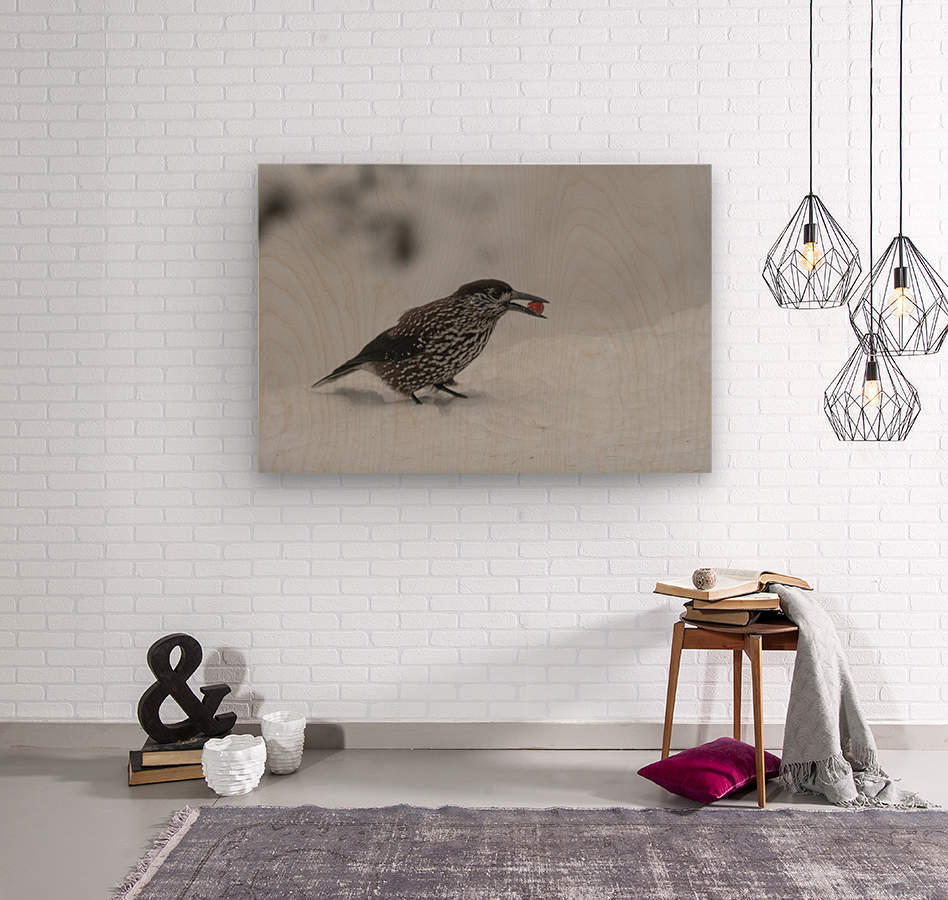 Spotted nutcracker in the snow  Wood print