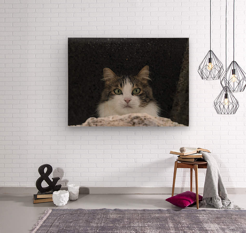 Cat portrait  Wood print