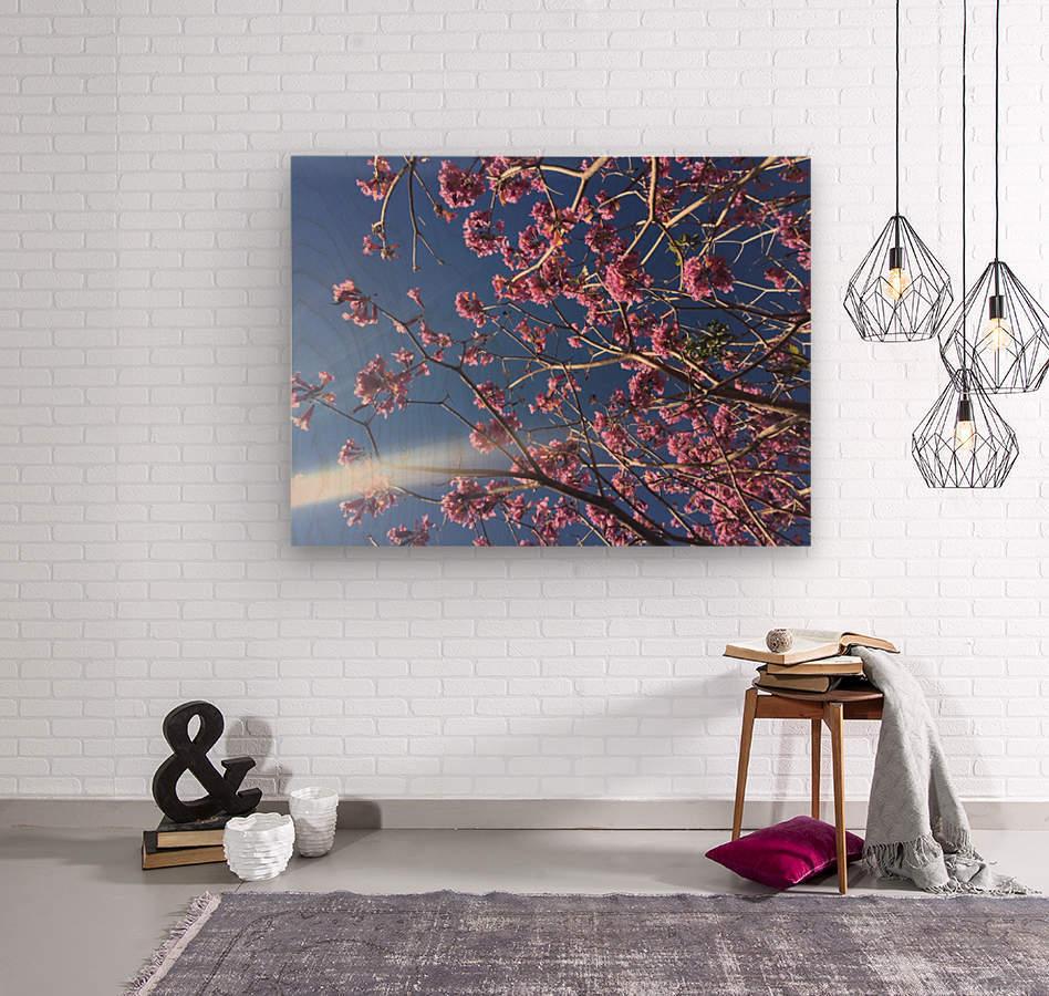 Anime cherry blossom xx  Wood print