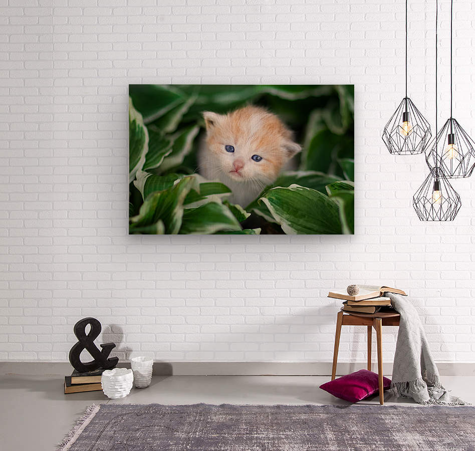 Orange Kitten  Wood print