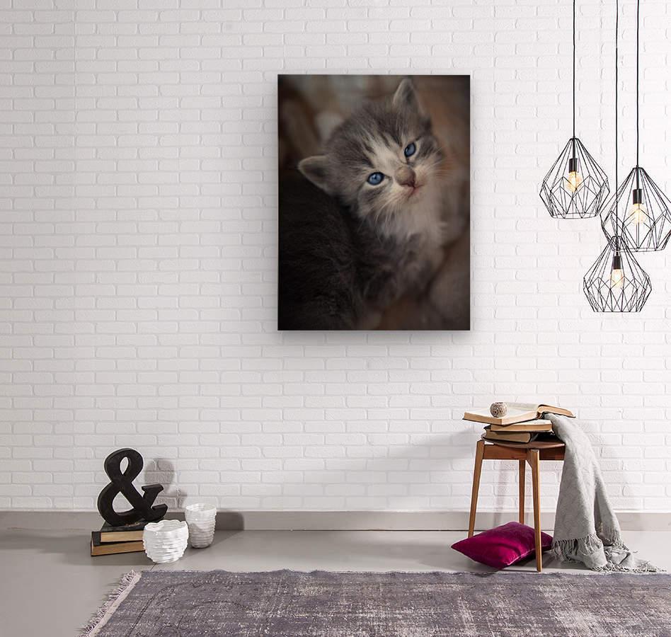 Gray Kitten  Wood print