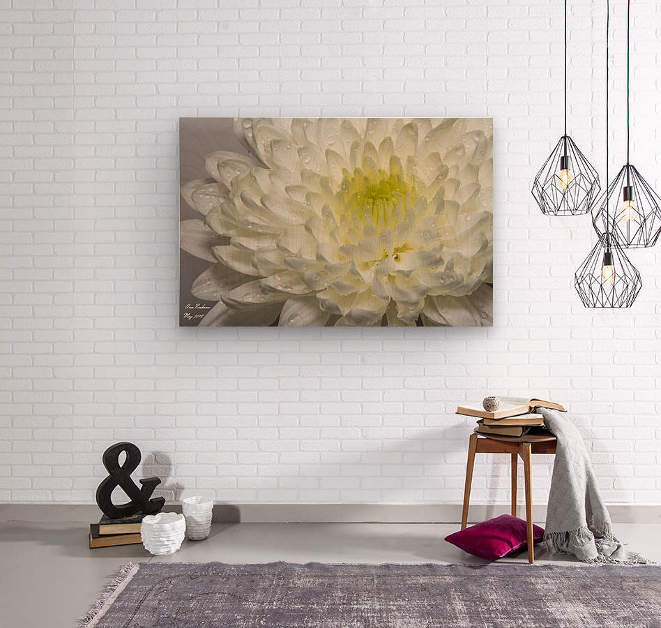 White Mum Flower With Water Droplets Crystalfind Canvas