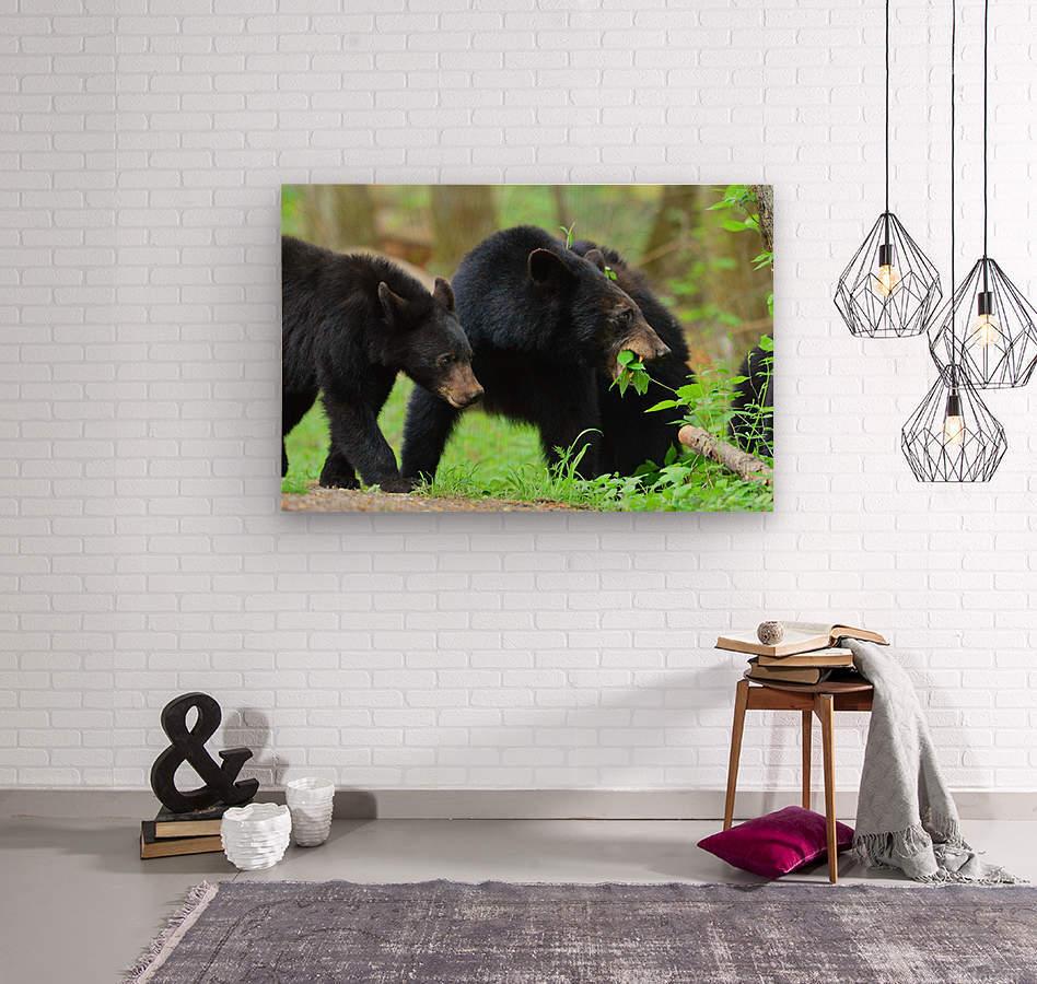 3541- Black bear  Wood print
