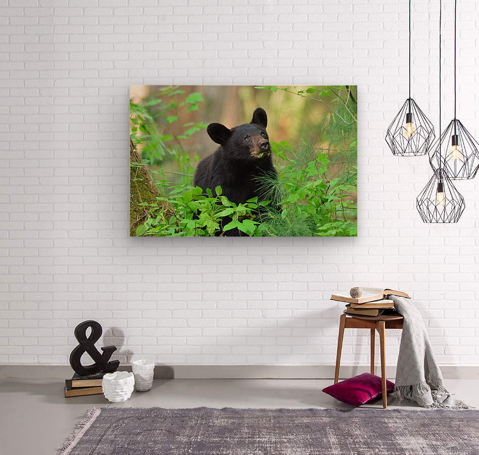 3597-Black Bear  Impression sur bois