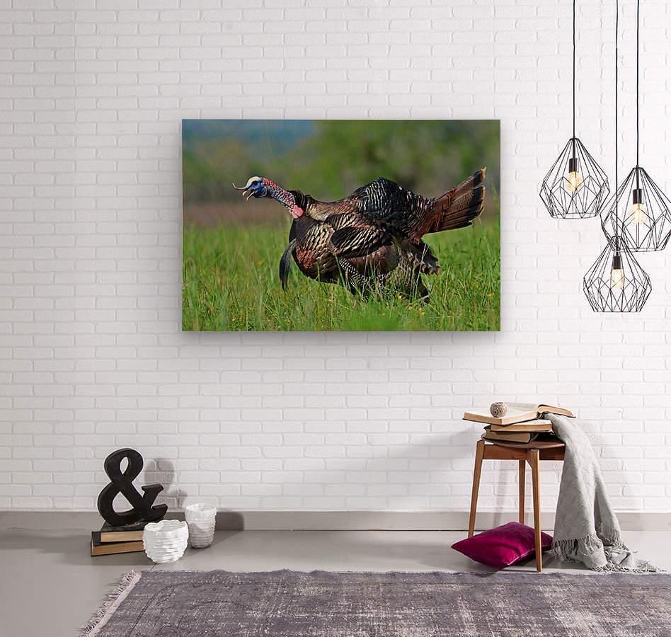 7_Gobbling Turkey  Wood print