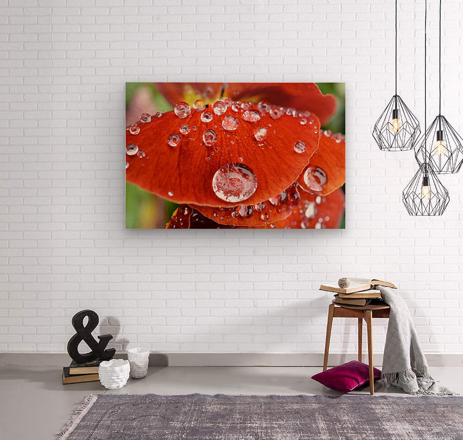 Raindrops On Orange Pansy Petal Photograph  Wood print