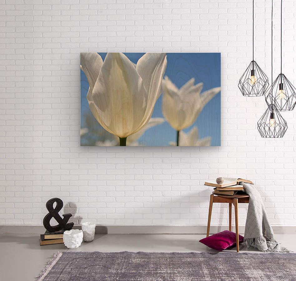 White Tulip Photograph  Wood print