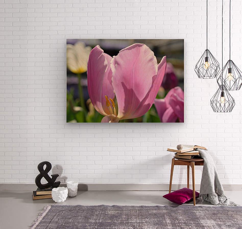 Purple Tulip Photograph  Wood print
