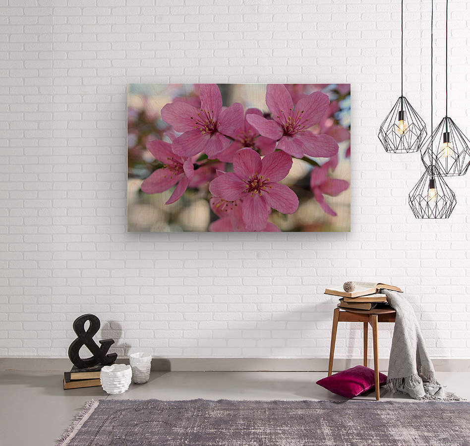 Pink Dogwood Photograph  Wood print