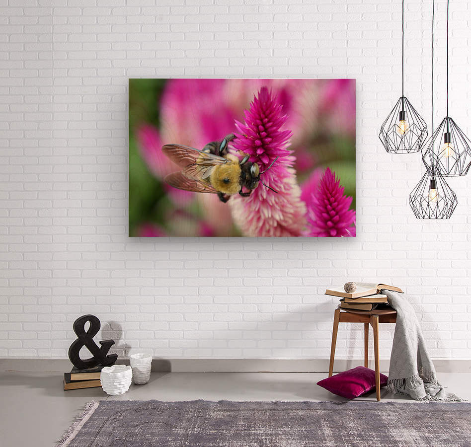 Bee On Pink Flower Photograph  Wood print