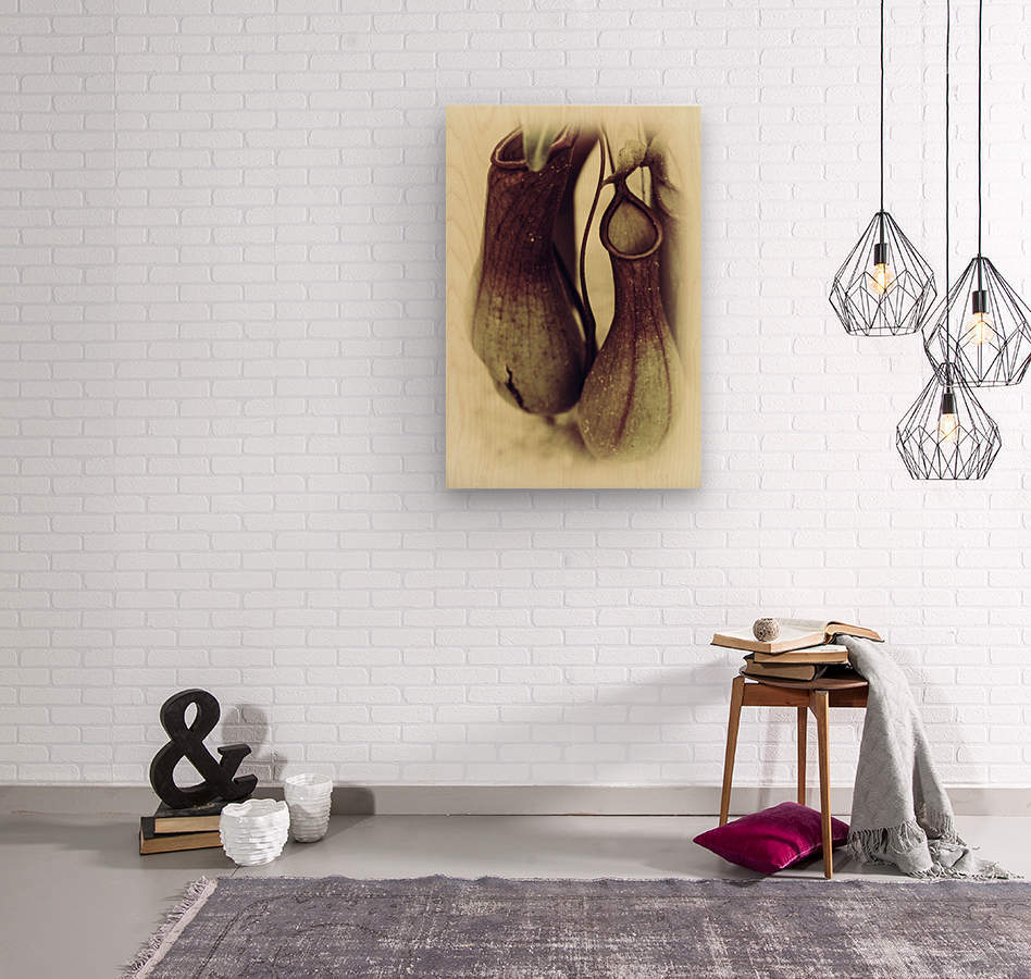 Nepenthes  Wood print