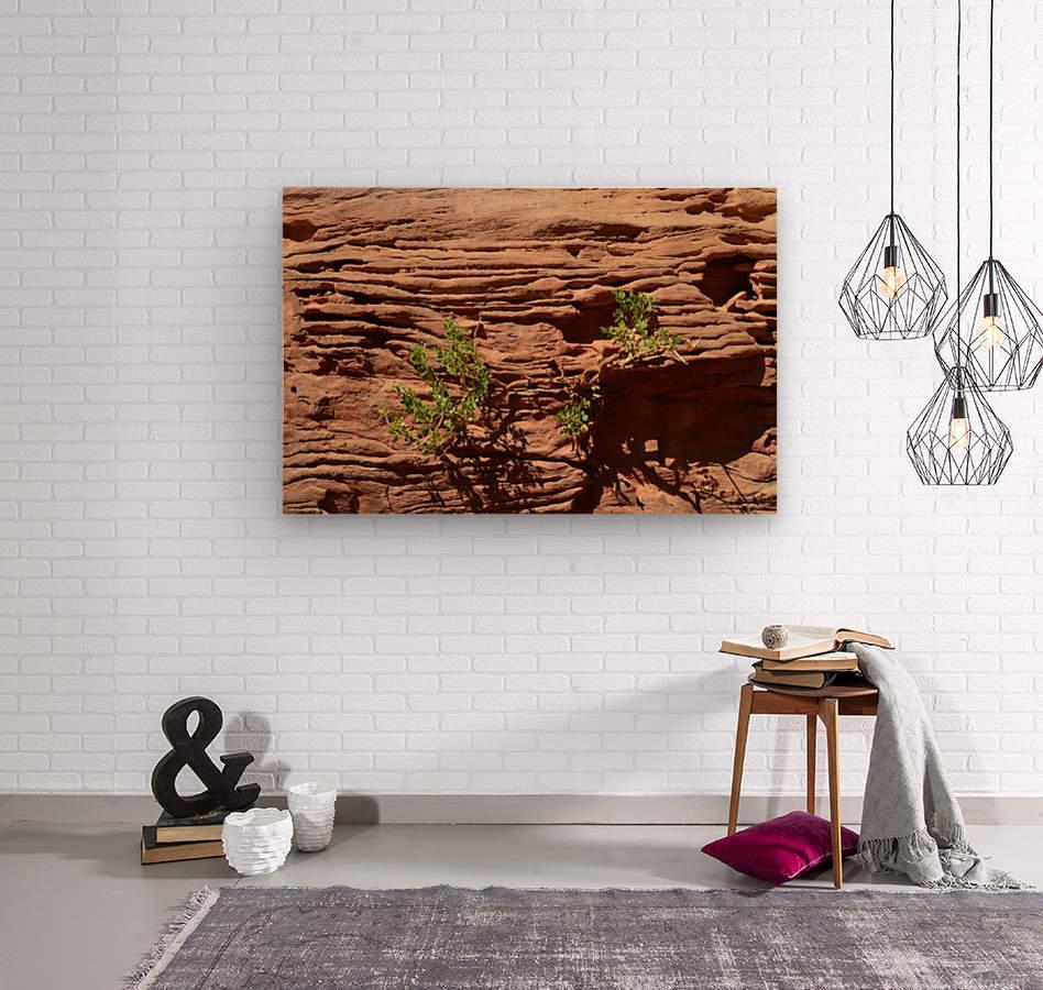 Life After Death  Wood print