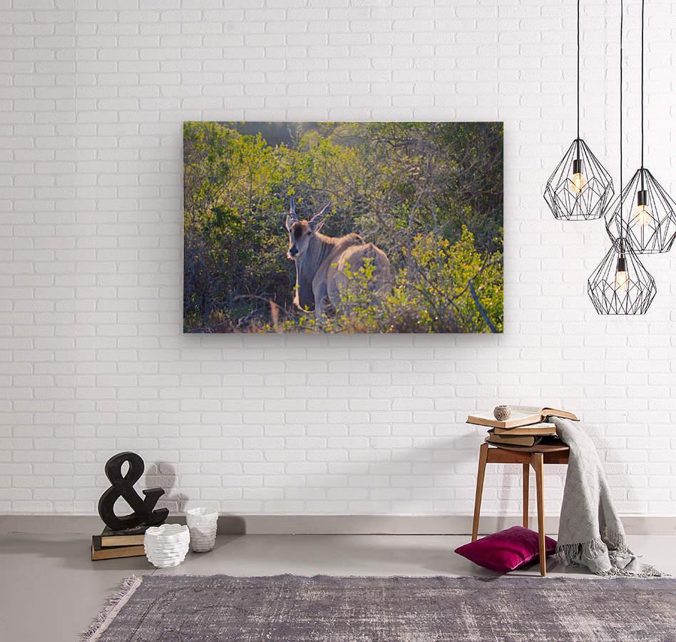 Deer Posing for Photo  Wood print