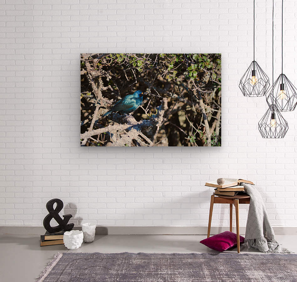 Blue Reflective Bird  Wood print