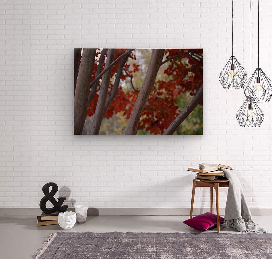 Fall Foliage Photograph  Wood print