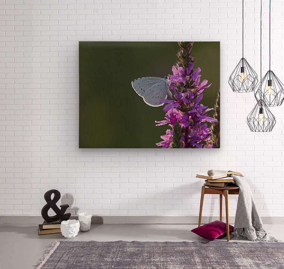 Butterfly on a flower  Wood print