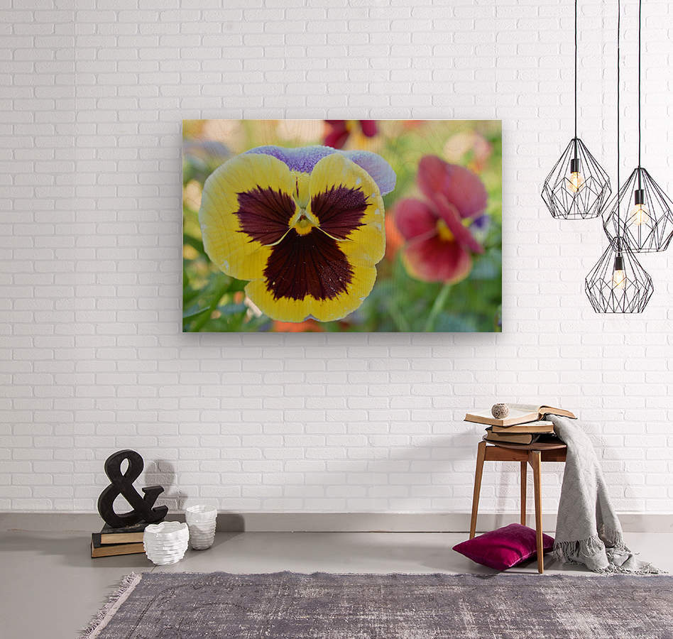 Yellow Pansy Covered In Due Photograph  Wood print