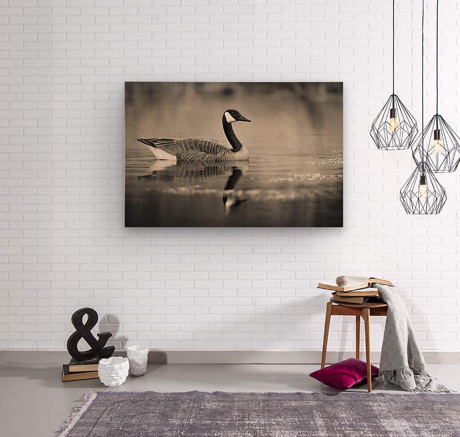 Canada Goose - 2  Wood print