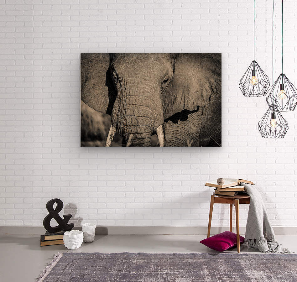 Elephant Portrait  Wood print