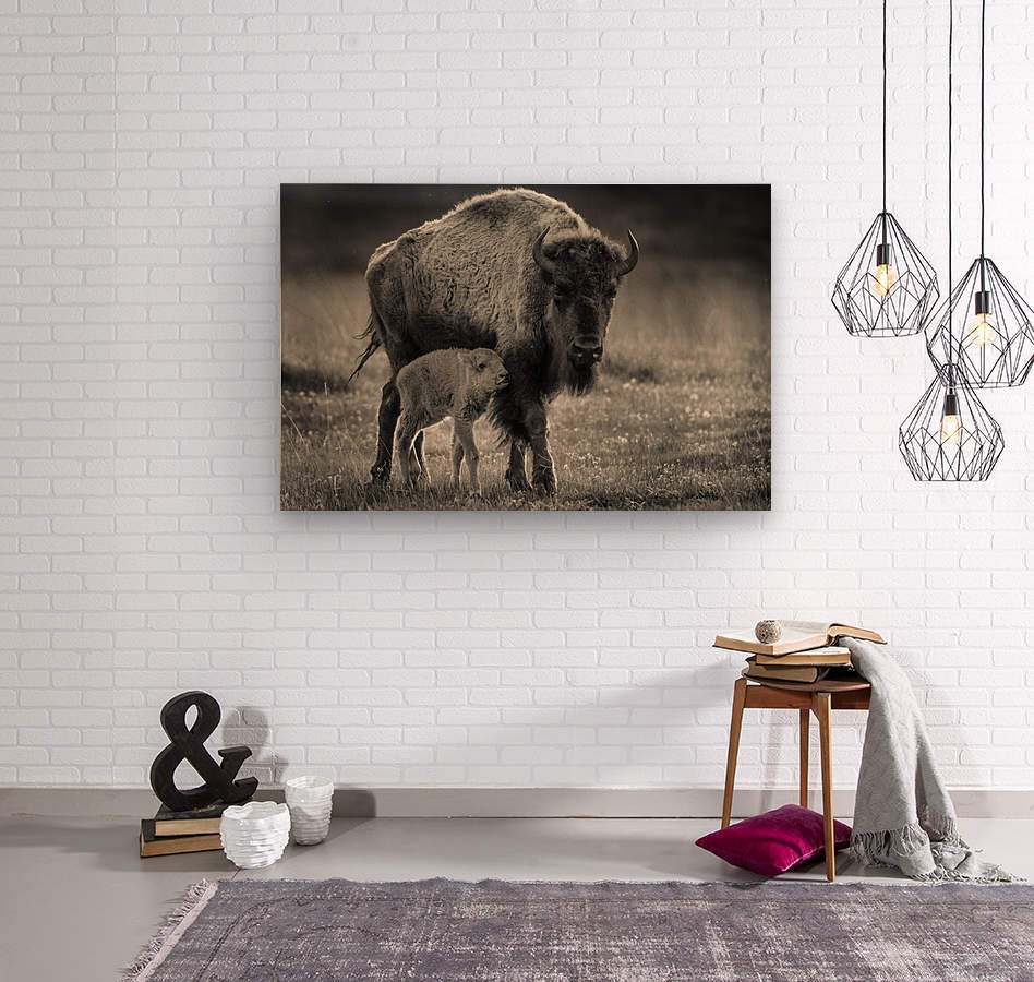 Bison love  Wood print