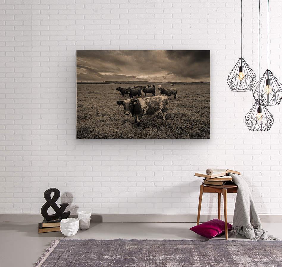 Cowscape  Wood print