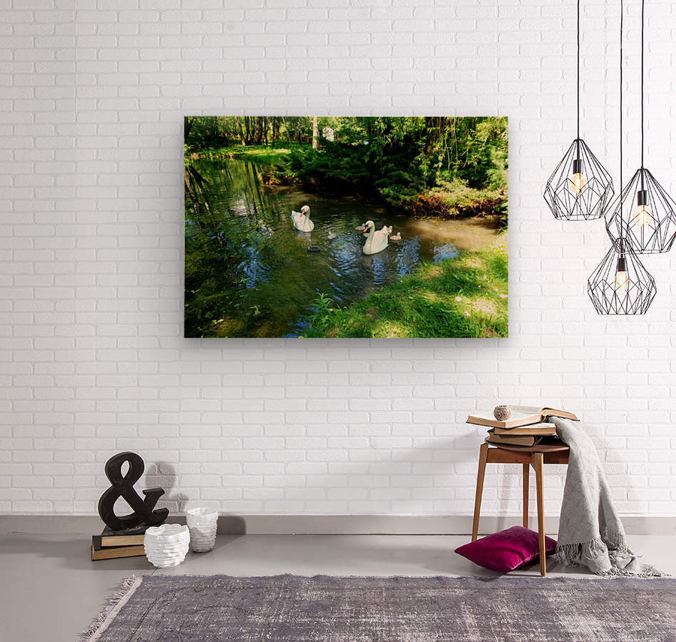 swan 6  Wood print