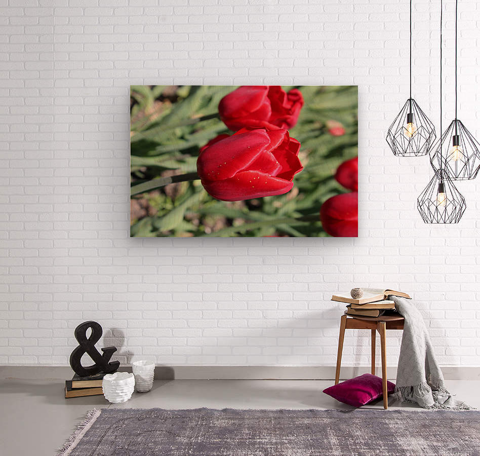 Tulips Red  Wood print