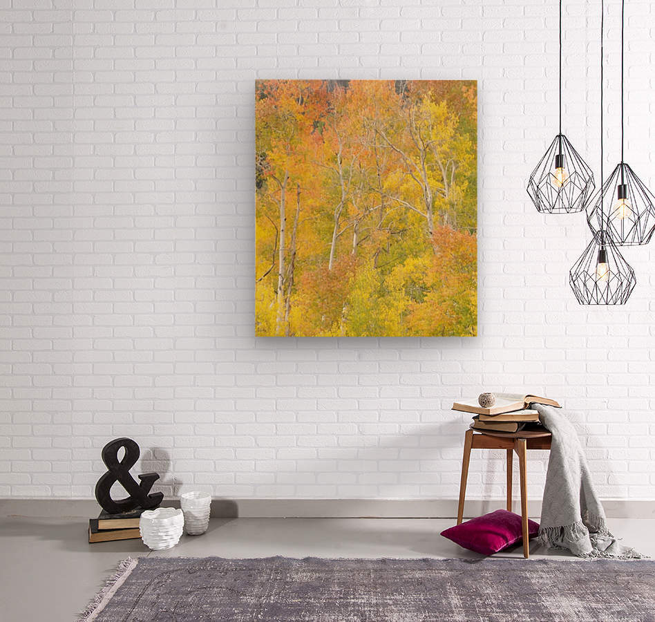 Changing Aspens - Vail Colorado  Wood print