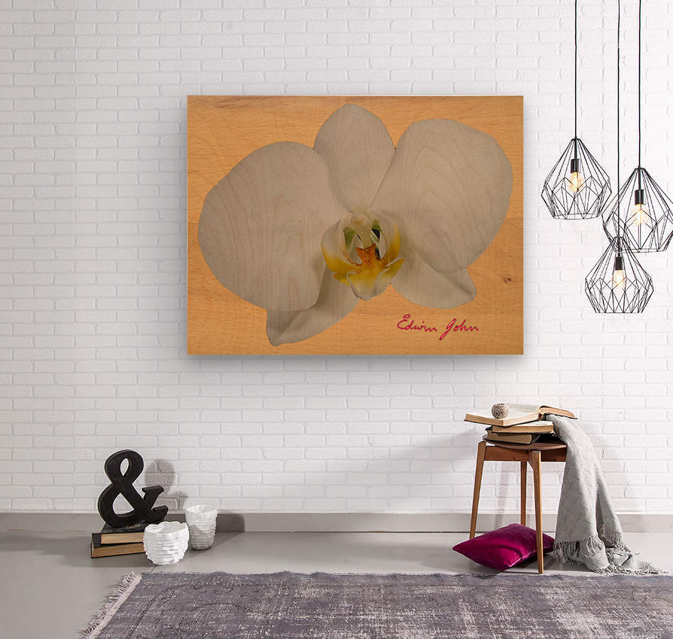 Moth Orchid Flower Single Flower White On Beech Wood Background