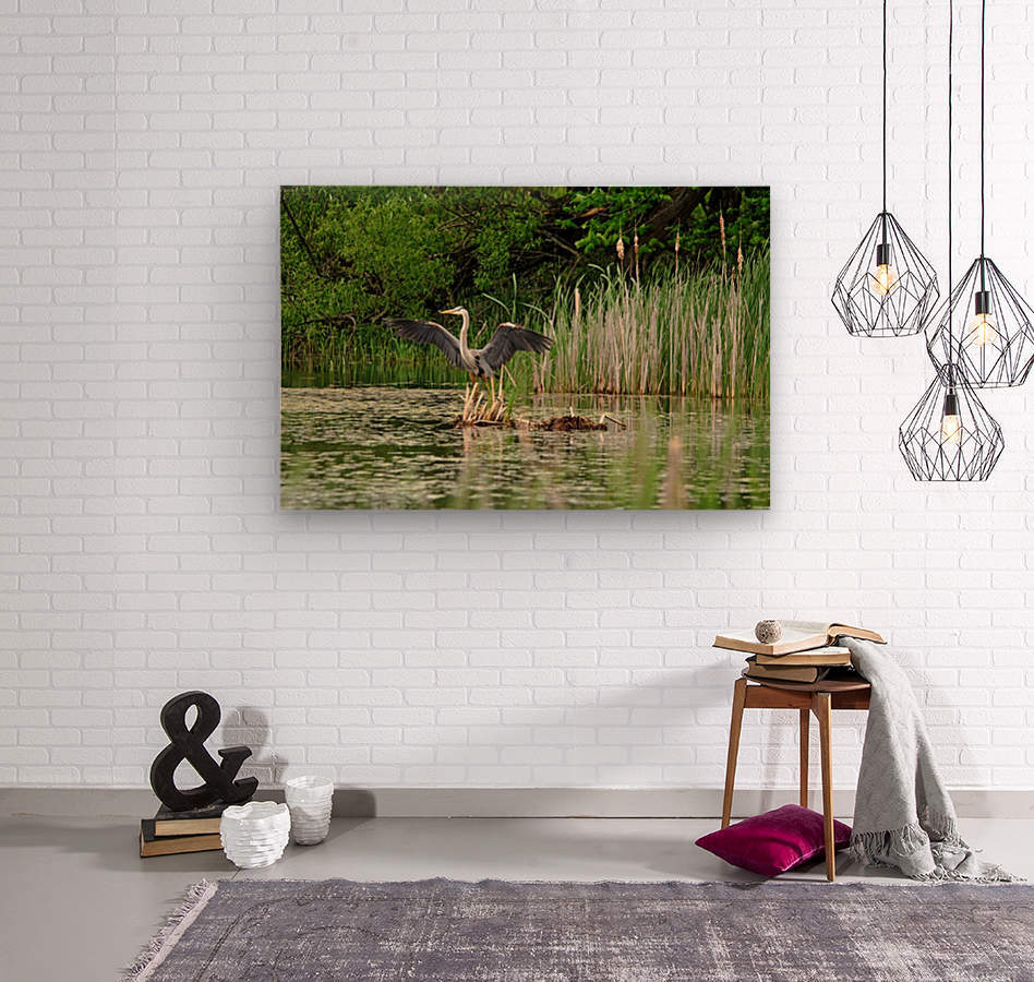 Great Blue Heron Landing  Wood print