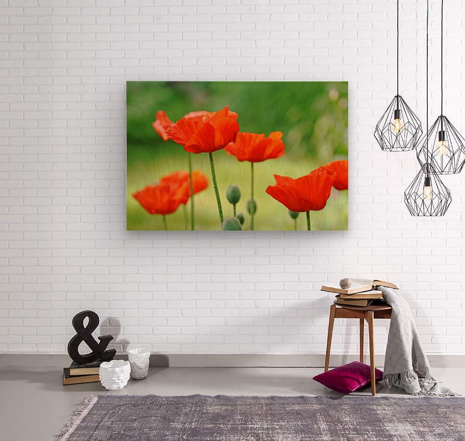 Morning Light Poppies  Wood print