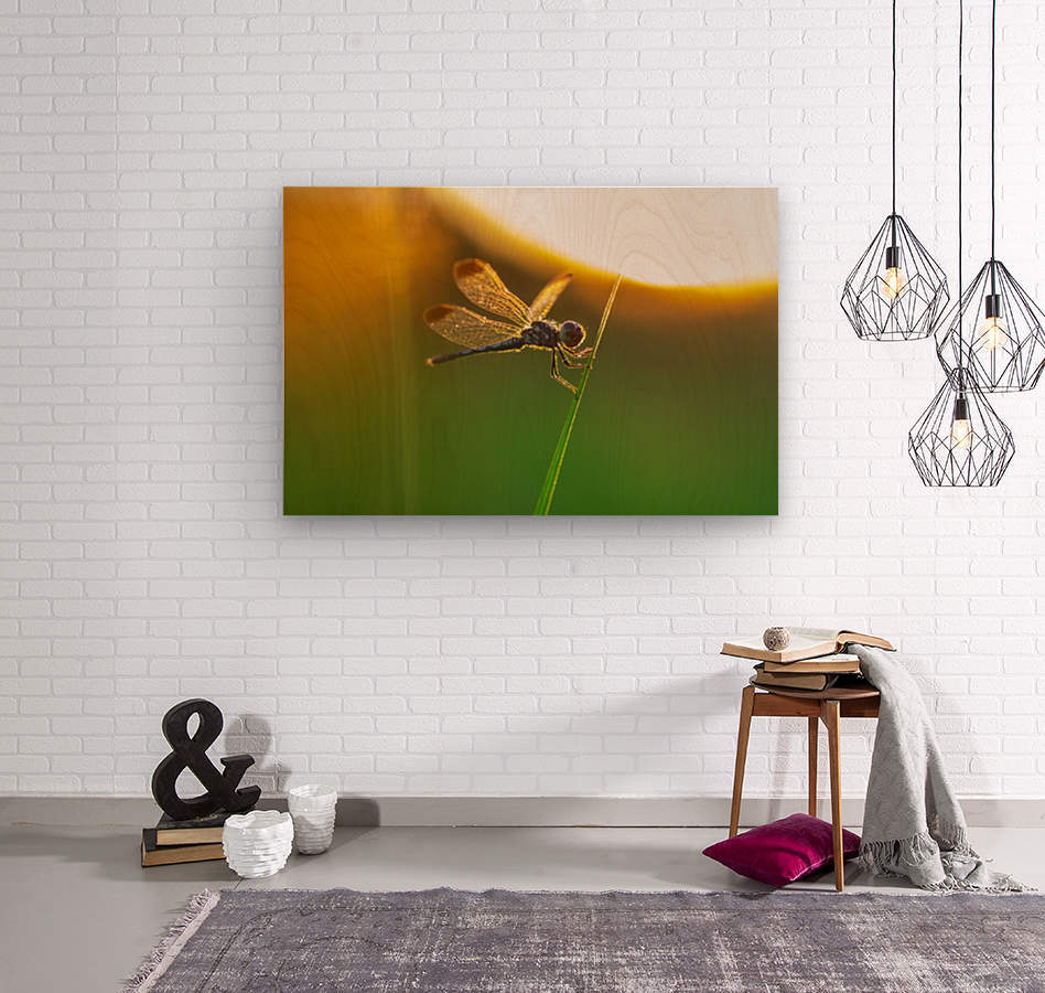 Dragonfly perching on grass twig  Wood print