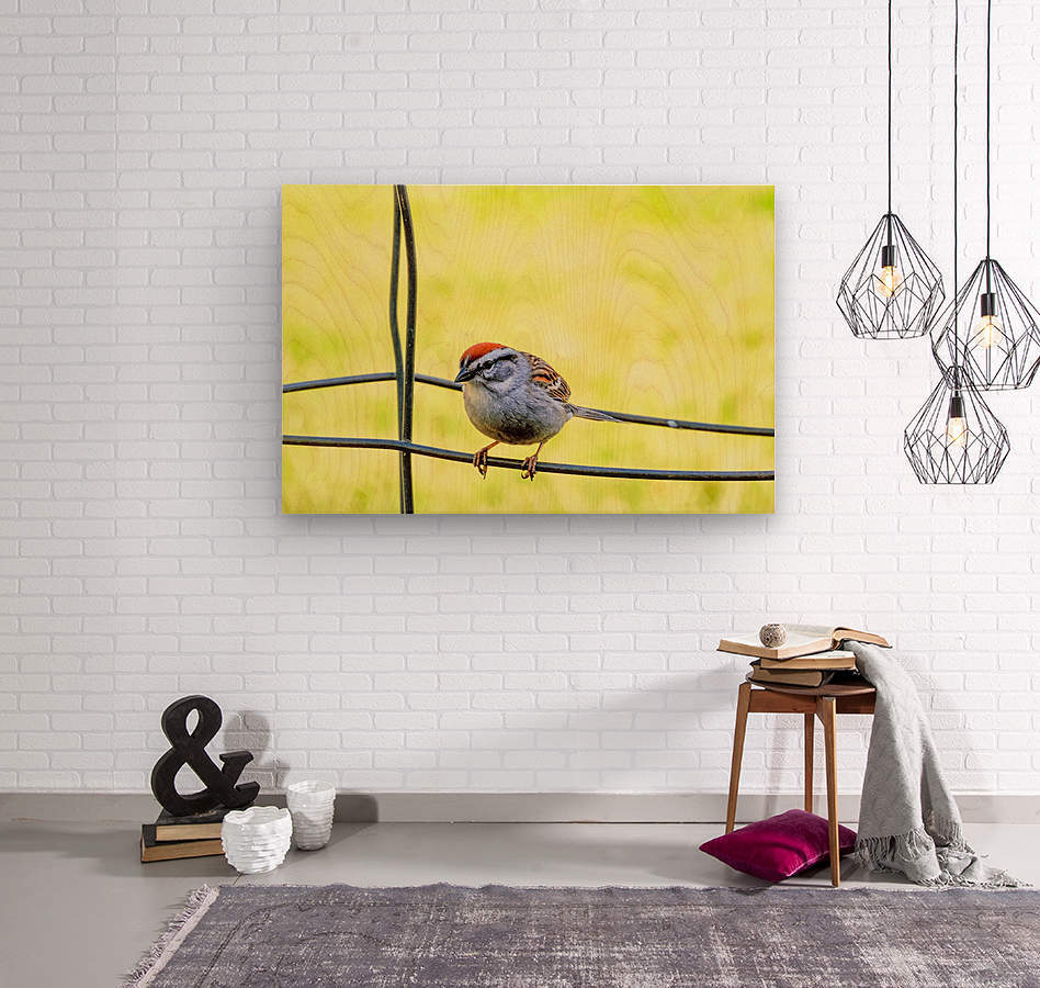Sparrow on Wire  Wood print